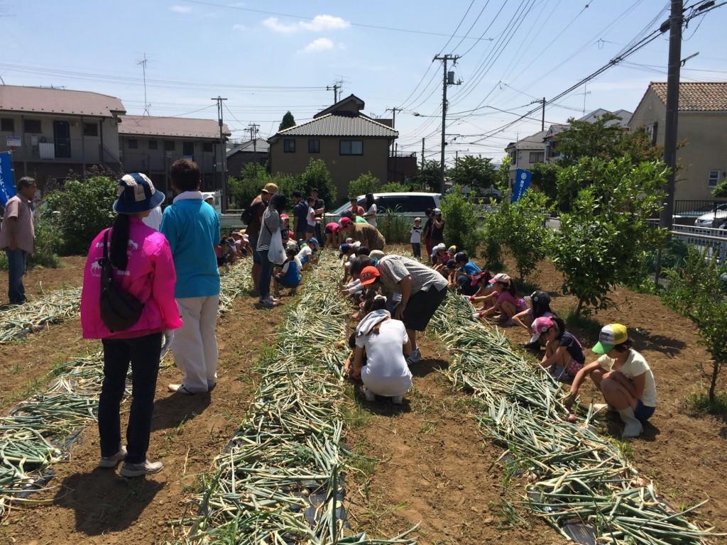 位置について、玉ねぎ収穫始め